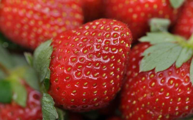 Mengonsumsi Stroberi dapat Memperkuat Memori Otak