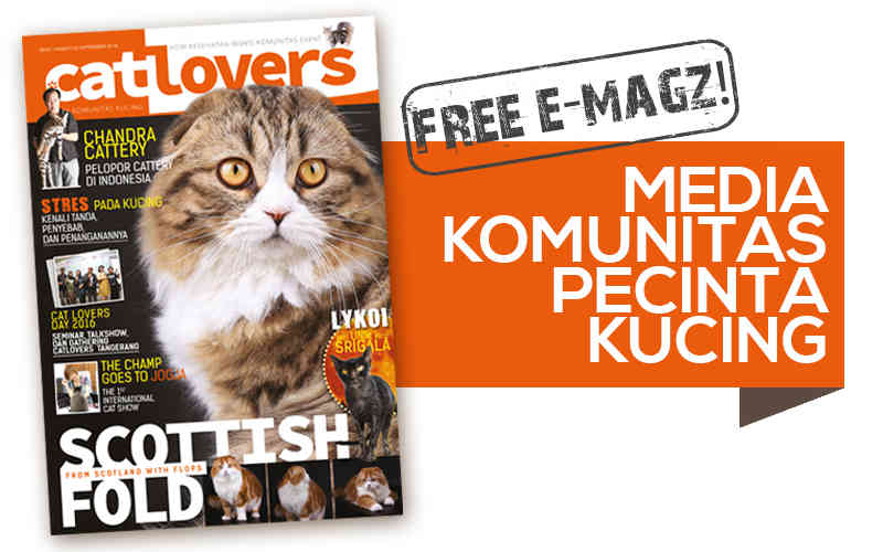 thumnail cat lovers edisi 1