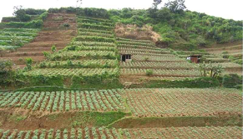 Bertani di Lahan Miring Kenapa Tidak?