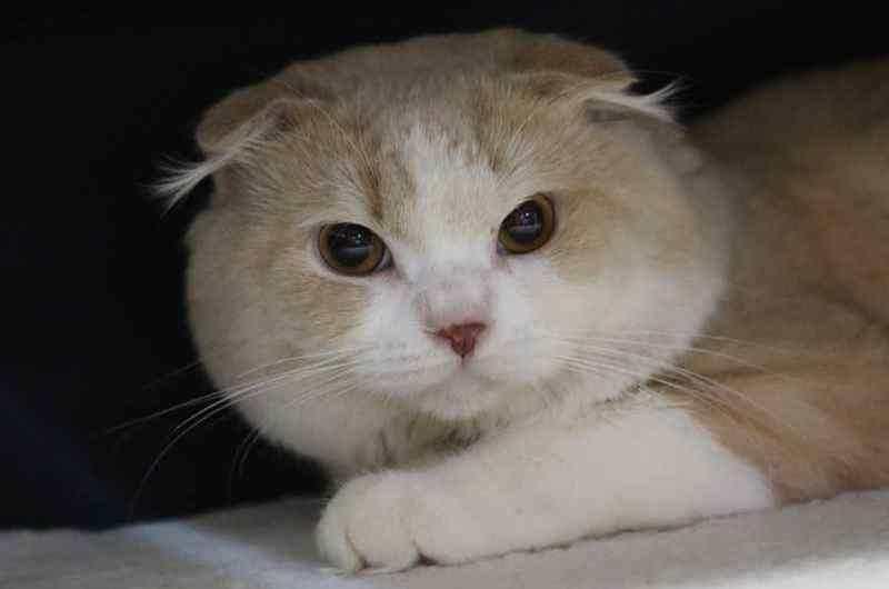 Cara Pintar Merawat Kucing Anggora Kesayangan