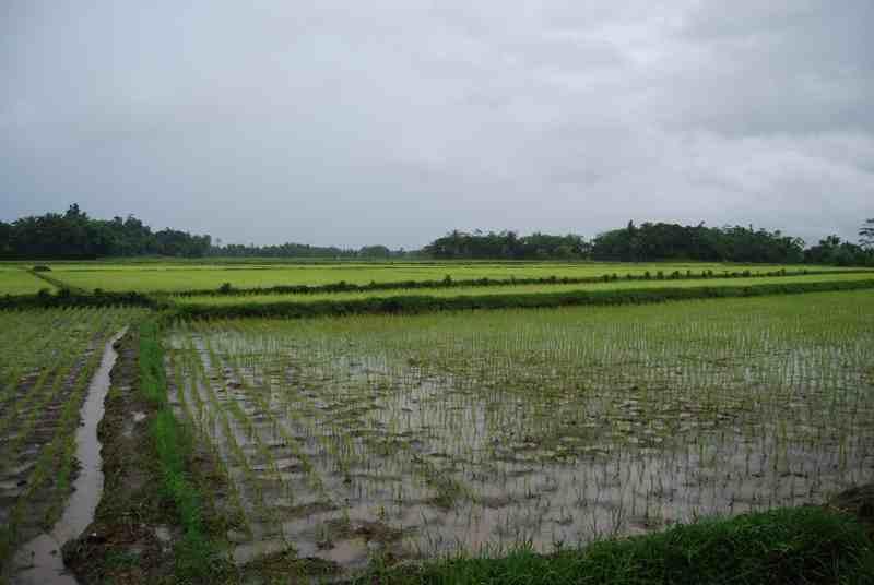 Indonesia dan Cina Jalin Kerja Sama di Sektor Pertanian