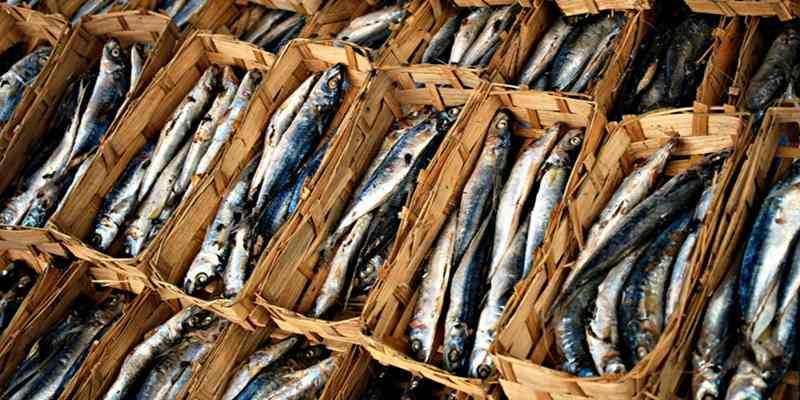 Melihat Cara Pengolahan Ikan Pindang