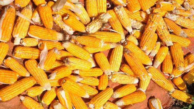 Mentan: Impor Jagung Turun Sebanyak 60%