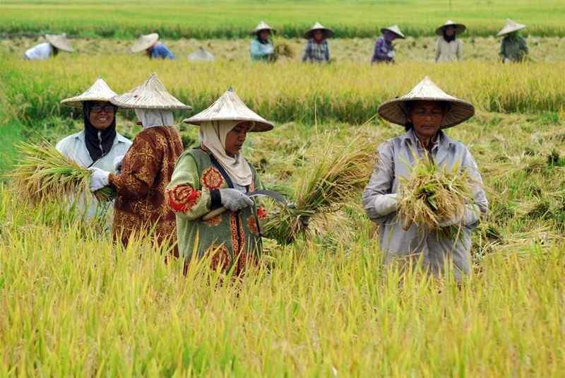 BPS: Kesejahteraan Petani RI Meningkat
