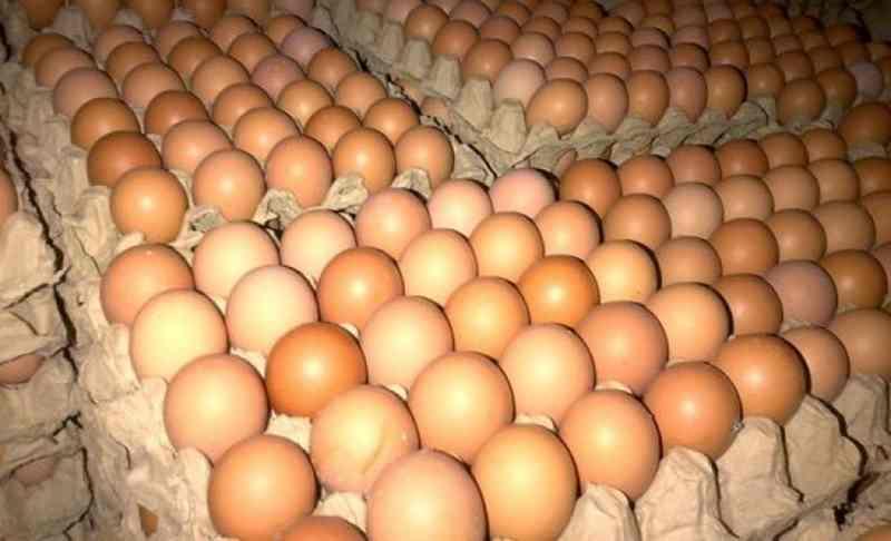Ingin Mendapatkan Hasil Telur Ayam Berkualitas? Lakukan Cara ini