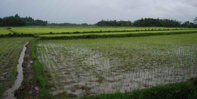 Kalimantan Timur Siapkan Daerah Irigasi Strategis