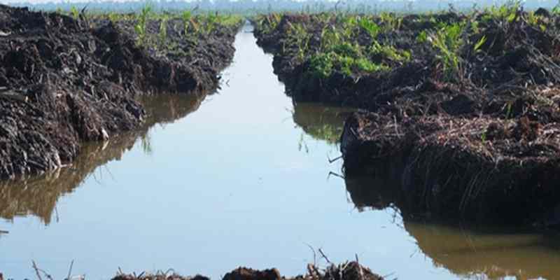 Melihat Proses Pembentukan Tanah Gambut