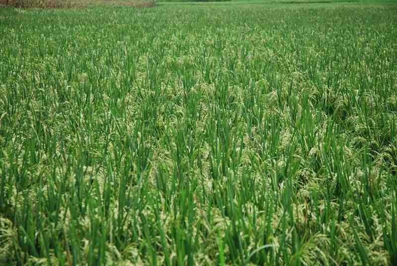 Mendag Akan Datangkan Investor Pertanian ke Kebumen