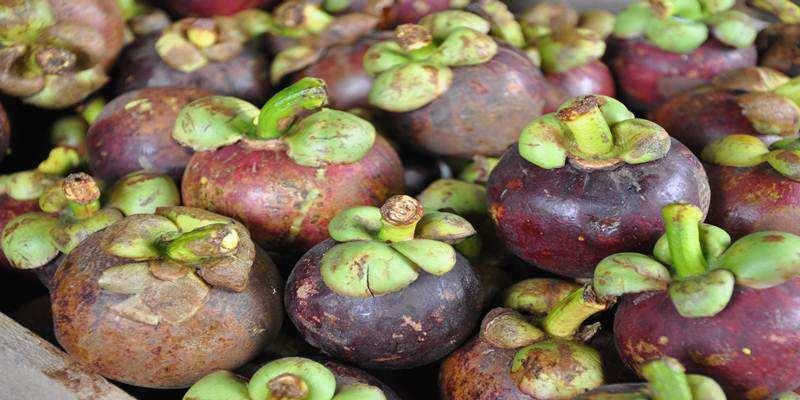 Mengolah Kulit Manggis Sebagai Ramuan Herbal