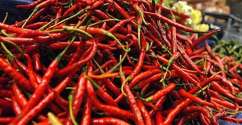 Mentan: Harga Cabai di Tingkat Petani Hanya Rp14.000/kg