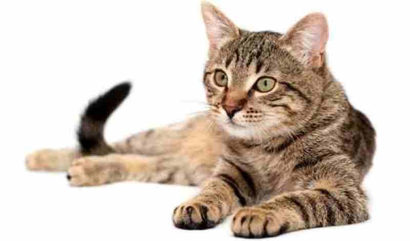 Tips Jitu Agar Kucing Peliharaan di Rumah Tidak Nakal