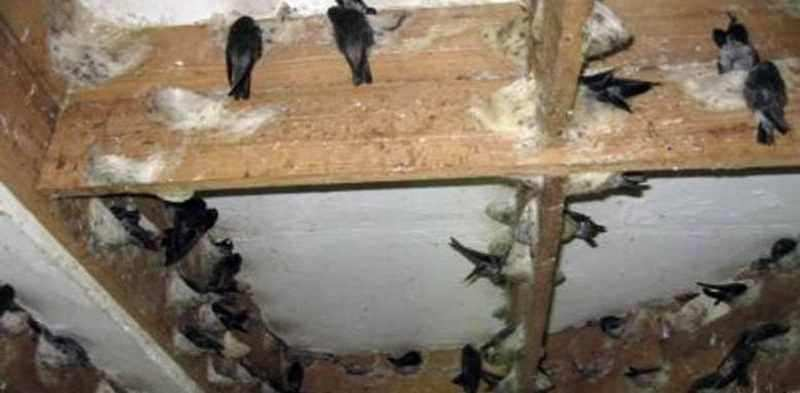 Tips Jitu Beternak Burung Walet dengan Benar