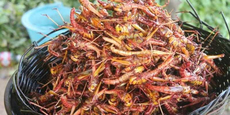 benarkah-protein-serangga-bisa-menjadi-alternatif-pangan