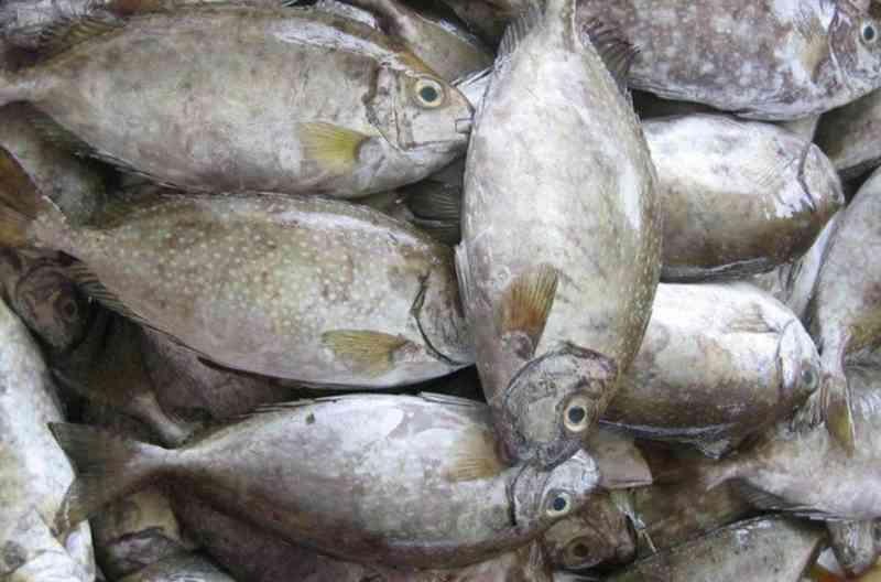 harga-ikan-melonjak-akibat-tangkapan-ikan-berkurang