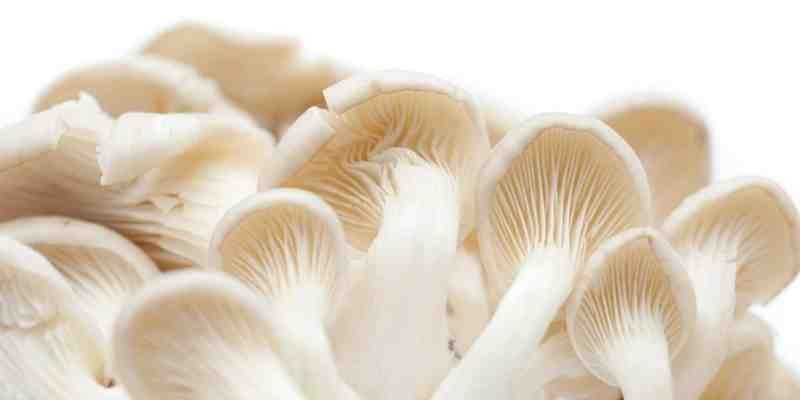 inilah-manfaat-jika-anda-rutin-mengonsumsi-jamur-tiram