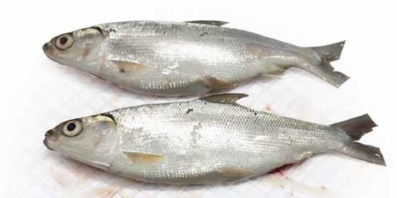 Melihat Potensi Bisnis Budidaya Ikan Bandeng