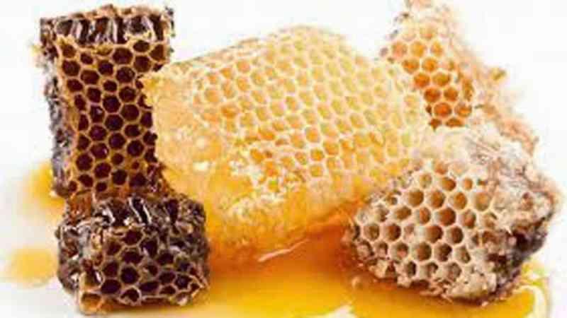 mengenal-jenis-jenis-lebah-penghasil-madu