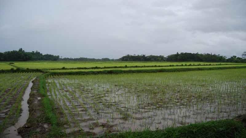 Pemerintah Sediakan Lahan Sawah Satu Juta Hektare