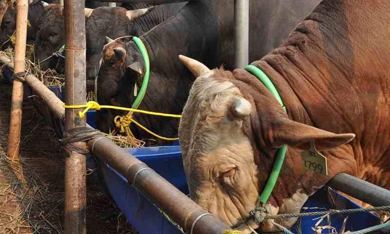 Mentan Tantang Peternak Sulawesi Selatan Genjot Produksi