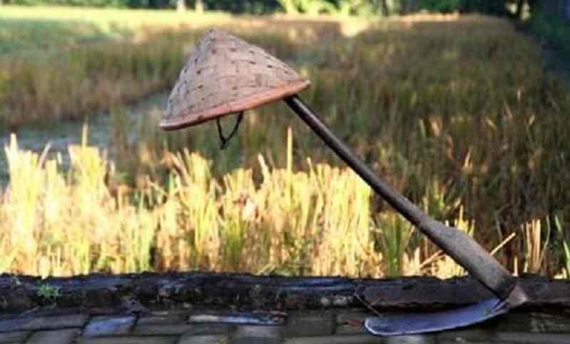 Petani: Kebijakan Impor Cangkul Sangat Tidak Logis