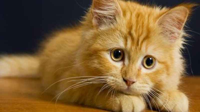 sukses-dan-berhasil-dari-hobi-memelihara-kucing