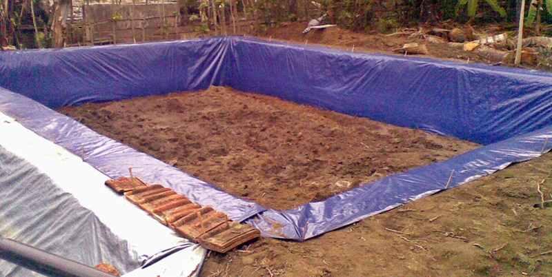 tata-cara-membuat-kolam-tanah-untuk-budidaya-ikan-lele