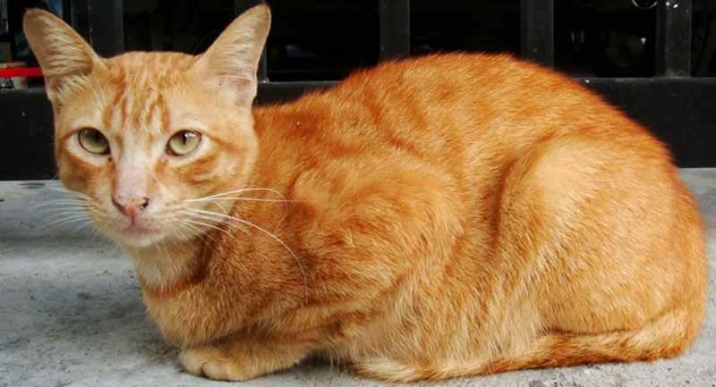 Tips Jitu Mengatasi Cacingan pada Kucing