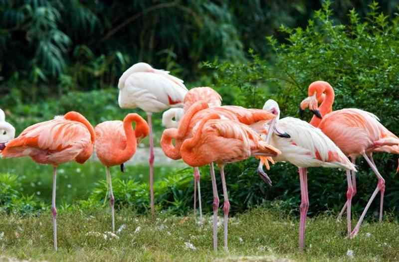 19-flamingo