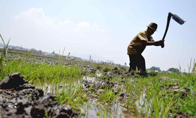 bulog-siapkan-rp73-triliun-untuk-beli-beras-ke-petani