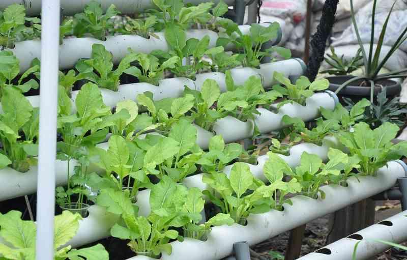 fantastis-bisnis-tanaman-hidroponik-raup-omzet-rp40-juta-per-bulan