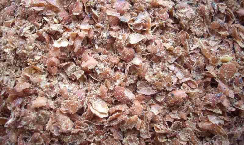 kulit-kacang-tanah-pakan-alternatif-untuk-hewan-ternak