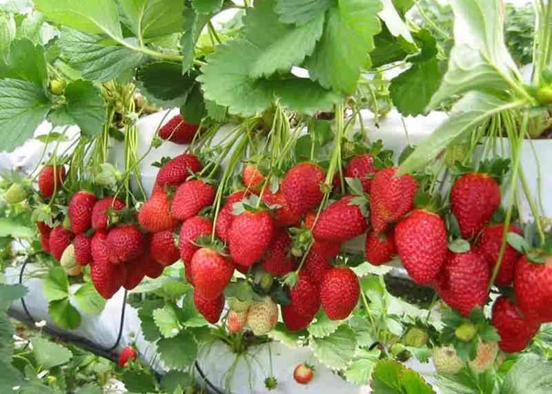 mau-cepat-kaya-yuk-bisnis-budidaya-buah-dan-sayur-hidroponik