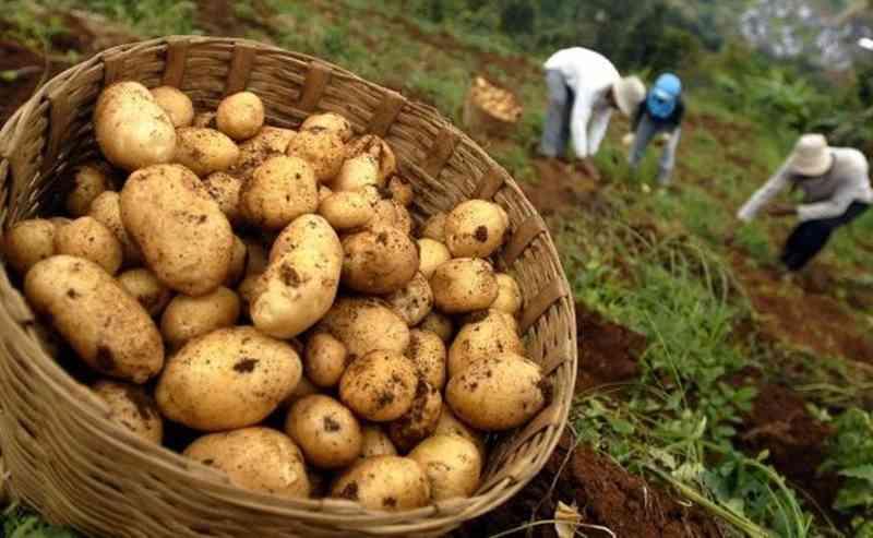 mendag-tenggarai-penyahgunaan-impor-kentang