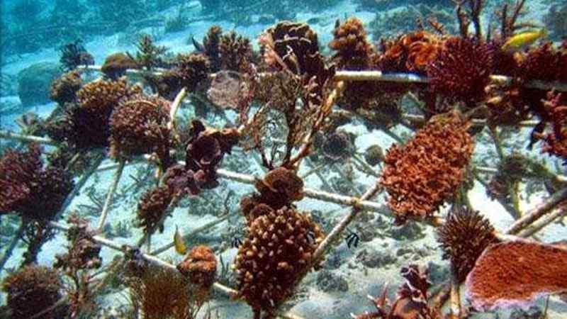 miris-terumbu-karang-di-australia-terancam-punah