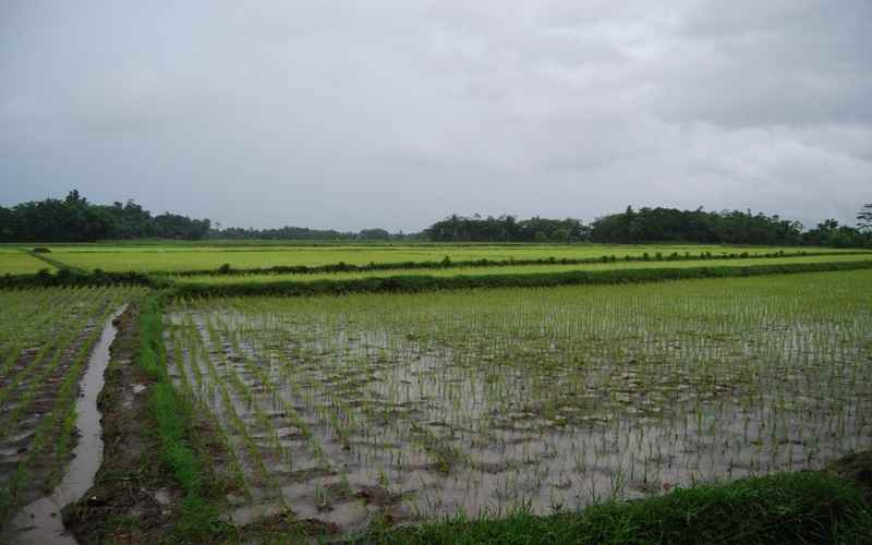 pemprov-kalimantan-tengah-siap-sediakan-lahan-pertanian-organik