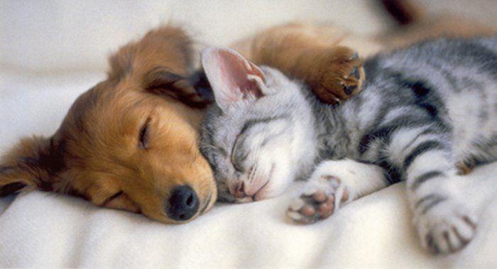 pengebirian-kucing-dan-anjing-peliharaan-perlukah