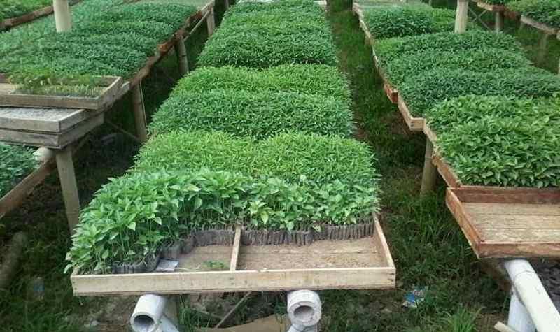 pria-ini-manfaatkan-lahan-bekas-makan-jadi-kebun-hortikultura