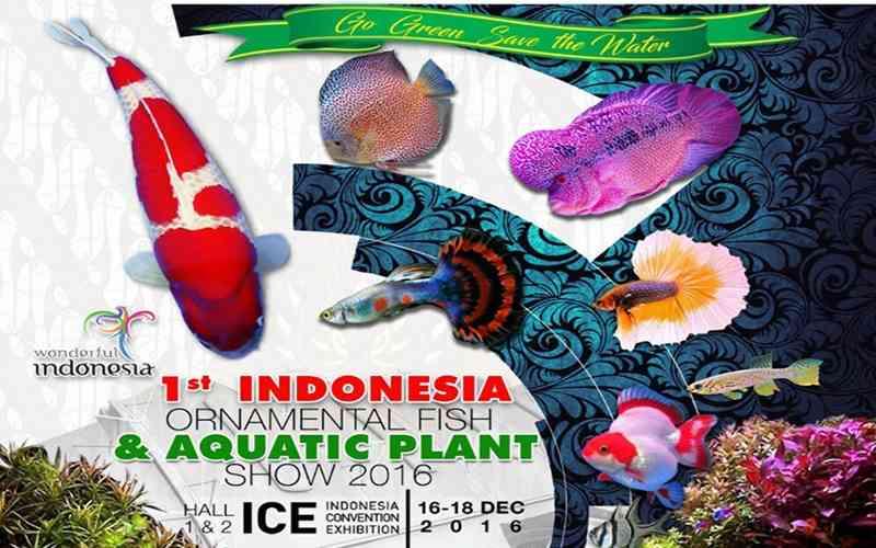 yuk-datang-dan-kunjungi-indonesia-ornamental-fish-aquatic-plant