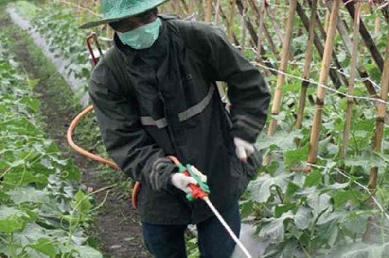 yuk-lihat-cara-kerja-pestisida-organik-dalam-memberantas-hama
