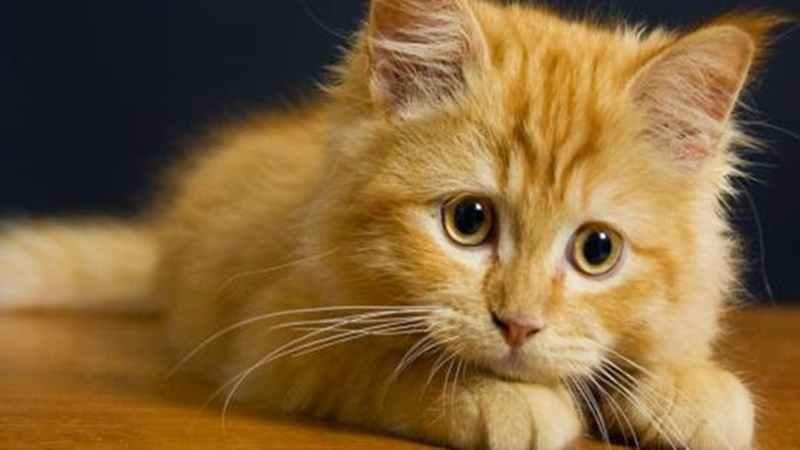 cara-memelihara-kucing-ala-dikta-yovie-nuno