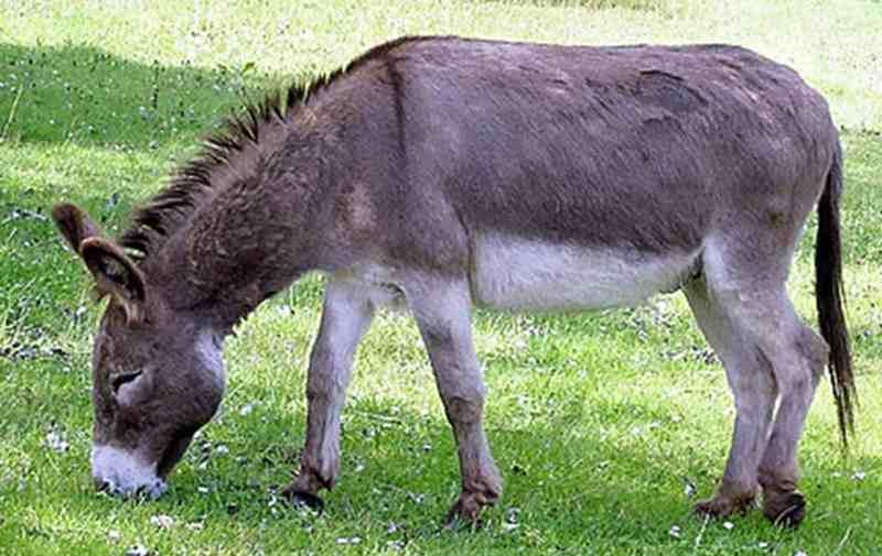 wow-di-australia-keledai-dikonsumsi-lho