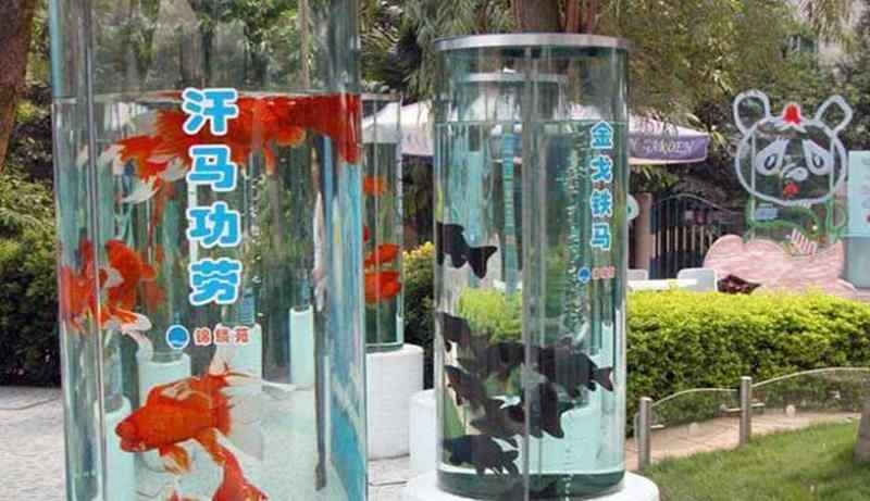 Wow Di Tiongkok Ada Taman Khusus Ikan Mas Koki Lho Artikel Pertanian Terbaru Berita Pertanian Terbaru