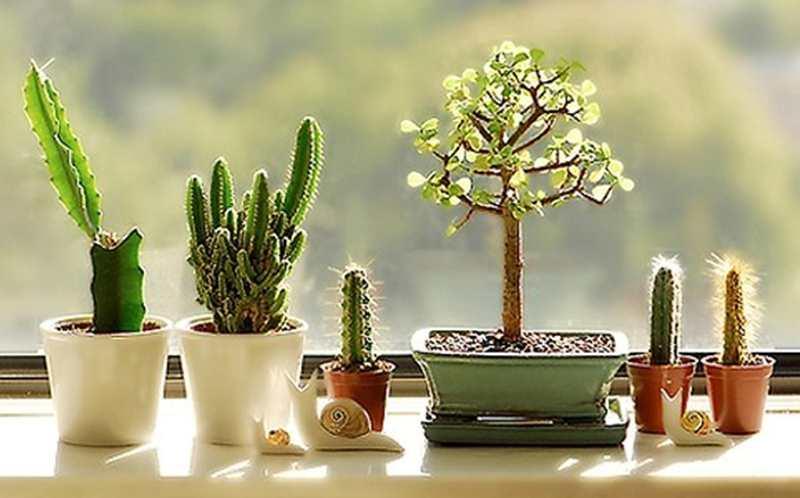 Hasil gambar untuk tanaman dalam ruangan