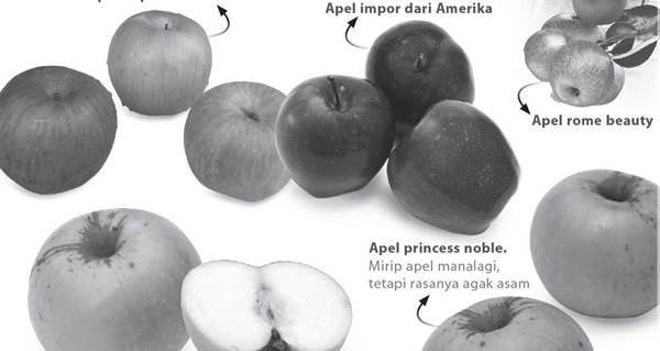 Apel (Malus domesticus Borkh)