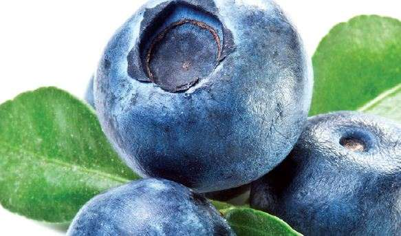 Sekilas Tentang Buah Blueberry