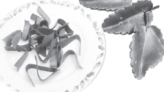 Cocor Bebek (Kalanchoe pinnata)