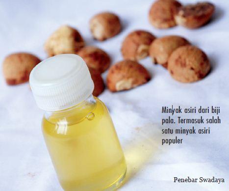 Membuat Minyak dari Tanaman Pala