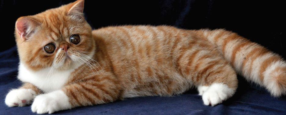 Cara Bersosialisasi Dengan Kucing di Rumah