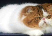 Psikologi-Kucing
