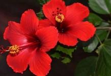 Bunga-Bunga yang Dapat Hidup di Daerah Tropis